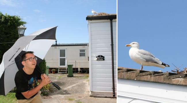 Prestatyn film-maker targeted by roof-nesting seagulls told to use