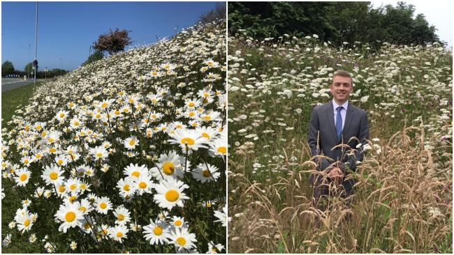 Wildflower meadow in Rhuddlan at Plas Lorna and Rhuddlan's deputy mayor, cllr Gareth Smith, admiring the wild flowers at Maes Bedwen