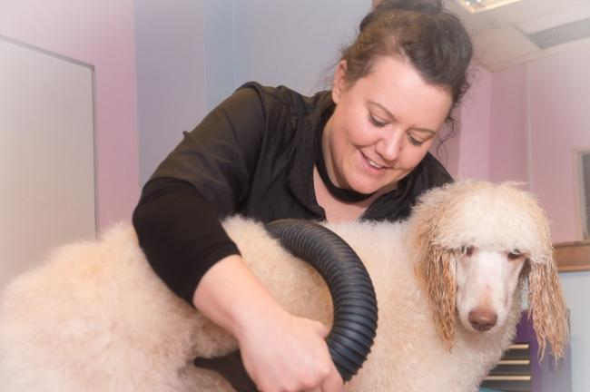 Cheryl Boulton who began her grooming career in 2001. Picture courtesy of Cheryl Boulton