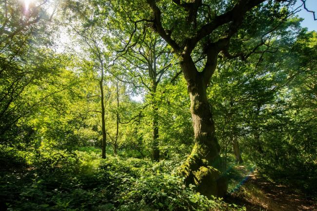 Glyn Davis Wood in Warwickshire which is under threat from HS2 (Philip Formby /Woodland Trust/PA)