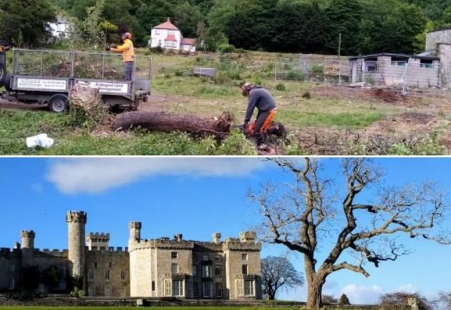 A wild pear tree is cut down (top) and Bodelywddan Castle