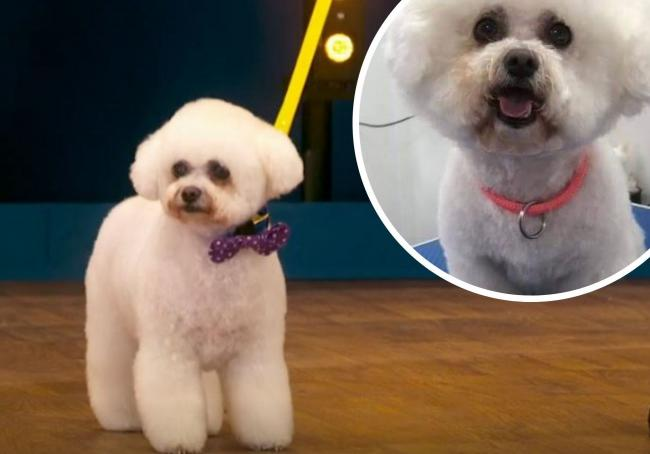 Midge shows off her makeover and (top right) Midge prior to her amazing groom. Pictures: First picture BBC Pooch Perfect and second picture, courtesy of Gill Mair