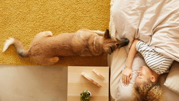 Rhyl Journal: At the end of the day, what matters most is what works for you and your pet. Credit: Getty Images / AnnaStills