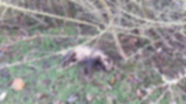 Blurred image. Picture: NWP Rural Crime Team/Twitter