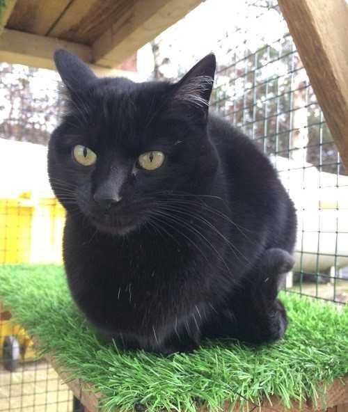 Prestatyn Rescue Centre To Celebrate The Beauty Of The Black Cat