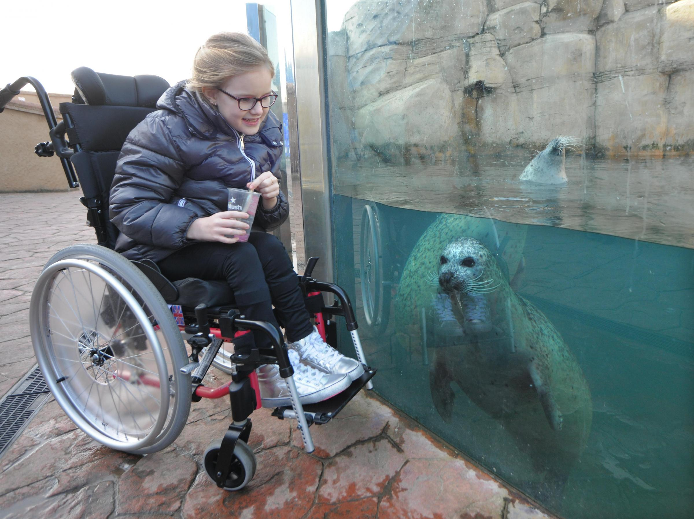 Kahia makes a new friend at SeaQuarium Rhyl's Sea Lion Cove. Picture: Phil Micheu