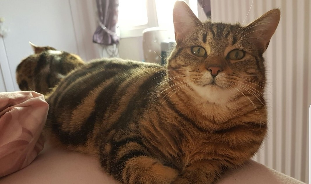 Sammy is missing from the Rhyl area