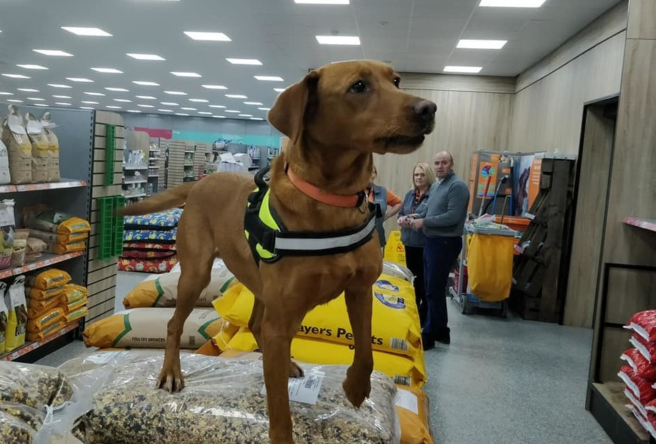 PetPlace in Abergele is offering its facilities and store to train bomb and drug dectection dogs